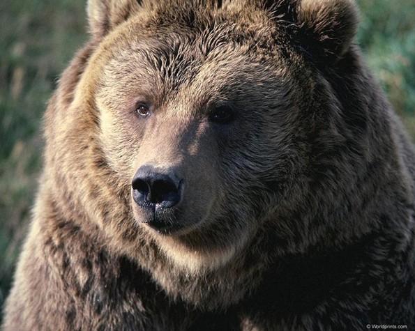 《演化足迹:熊族崛起》